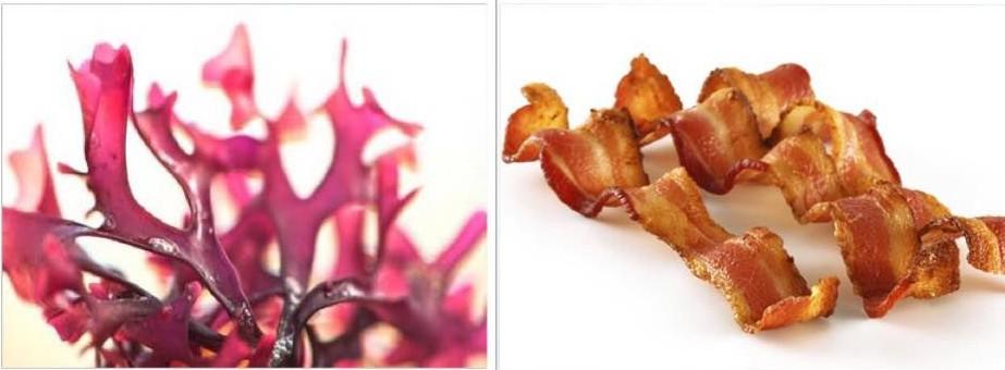 Now Trending: Super-Healthy Seaweed Tastes Like Bacon